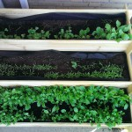 Square foot gardening balcony